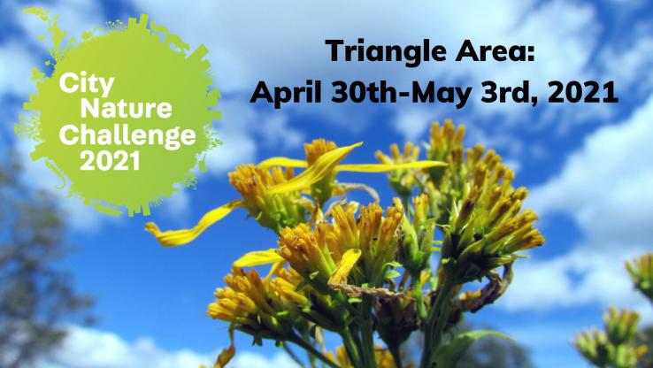 City Nature Challenge Triangle Area Cover Photo-2